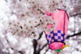 特集|桜の名所、ついでに国宝(京都・奈良)
