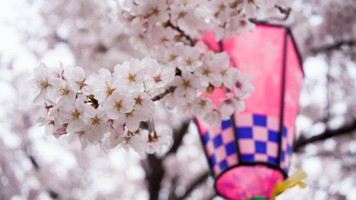 特集|桜の名所、ついでに国宝(西日本)